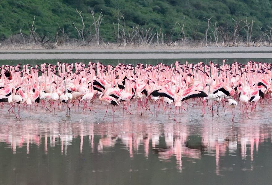 Lake Natron Safari