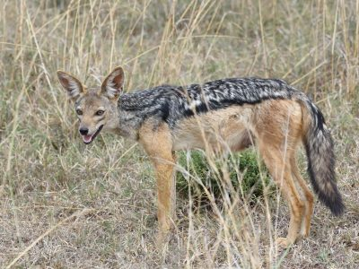 Southern Tanzania Wildlife Safari