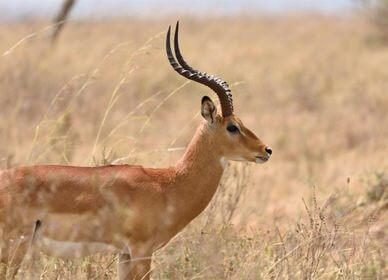 Kenya Highlights Wildlife Safari