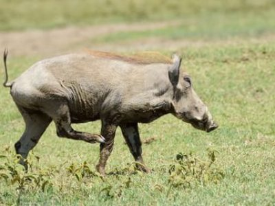 Lake Naivasha And Hell's Gate National Park Day Tour