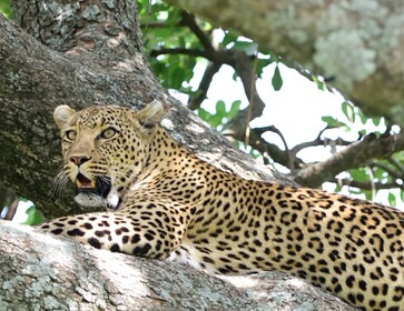 Kenya Highlights Wildlife Safari