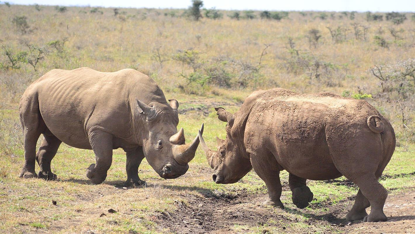 Big Game Safaris