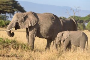 Great Rift Valley and Masai Mara Safari