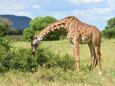 Tarangire National Park Safari