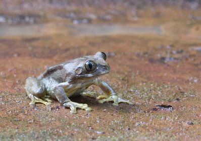 Kenya Herpetology Tour