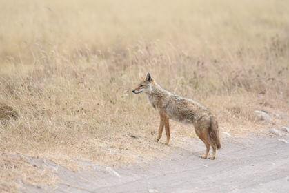 Tanzania Wildlife Tour