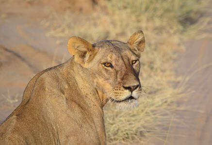Laikipia Safari