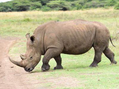 Nairobi National Park Day Tour