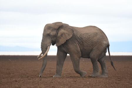 Big Five Kenya Safari