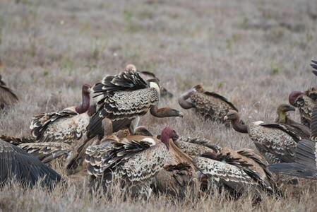 Kenya Prime Birding Safari