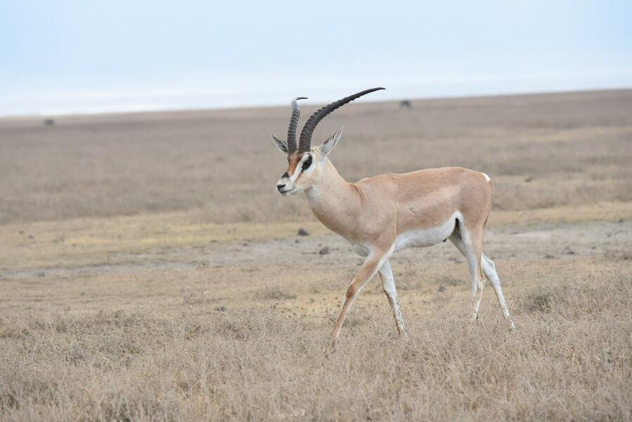 Kenya Bush and Beach Safari