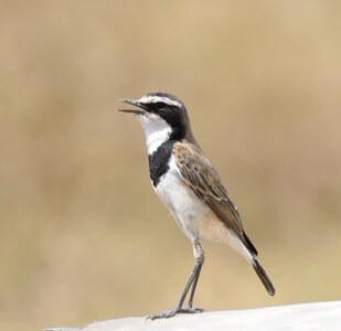 Tanzania Birding Safari