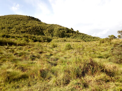 Aberdare Ranges Hiking Tour