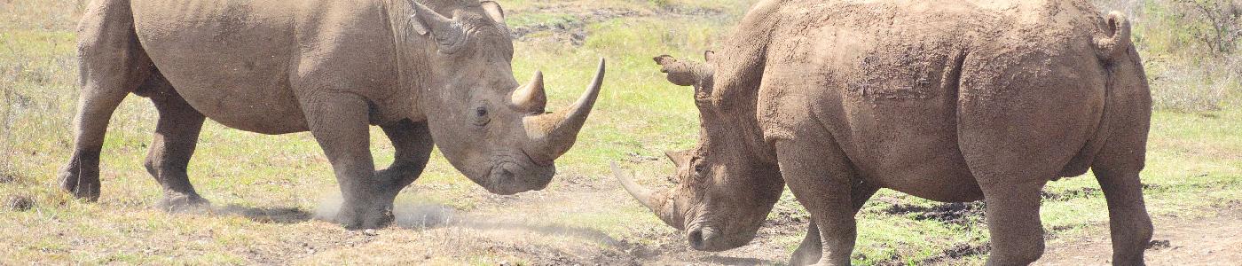 Scenes of Kenya Safari
