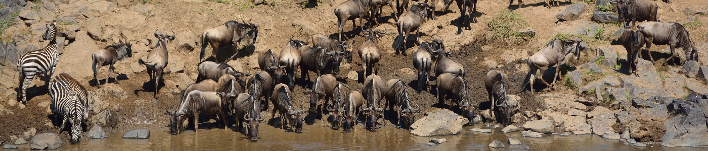 Kenya Wildlife and Cultural Safari