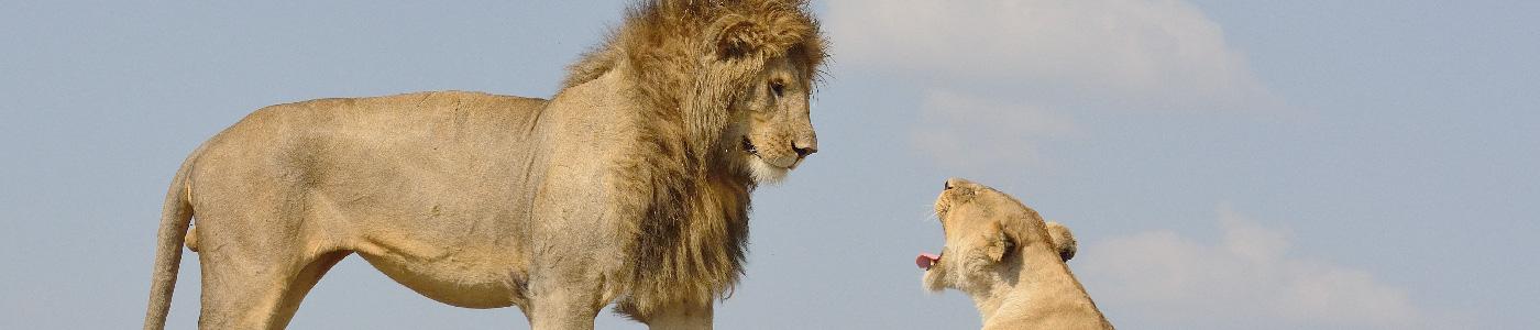 Kenya Predators and Beasts Safari