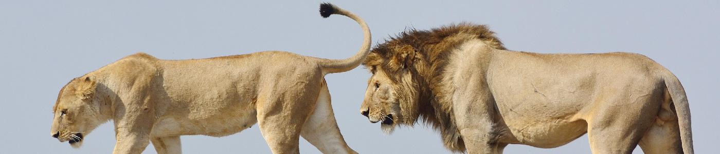 Bovid Africa Safaris