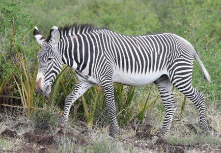 Best of Kenya Cultural Safari