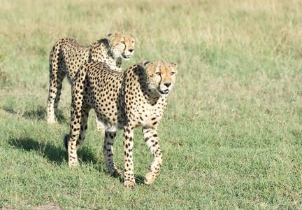 Kenya Predators and Beasts Safari