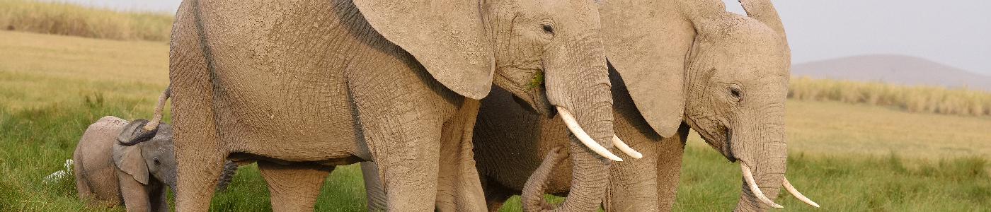 Explore Kenya Safari