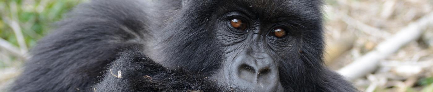 Serengeti Safari & Rwanda Primates