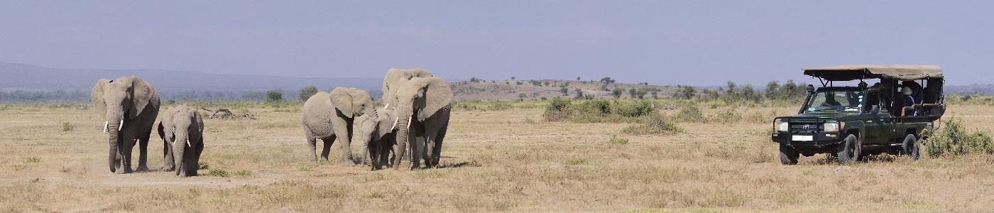 Kenyan Gems Safari