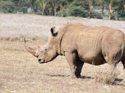 Murchison Falls National Park and Ziwa Rhino Sanctuary